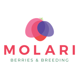 Molari - Logo RGB no sfondo